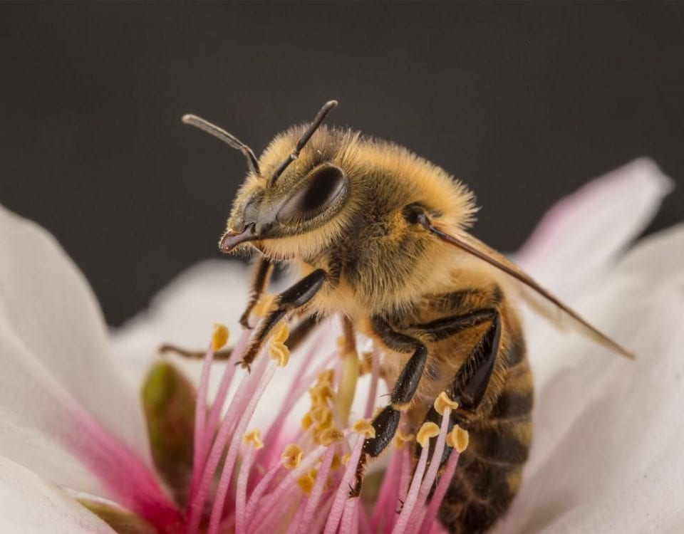 News from Z Specialty Food: Bumblebees Make Flowers Explode!