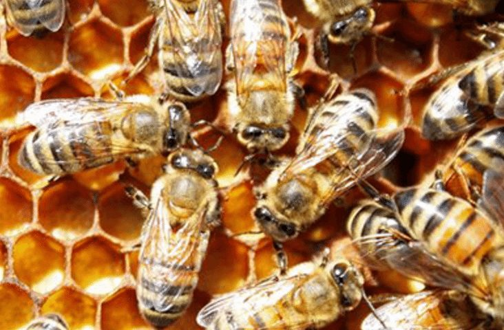 Answers about bees from very smart people